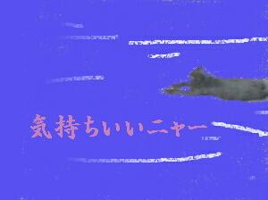 CIMG8601-0.jpg