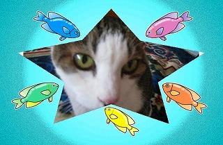 魚とシャル.jpg