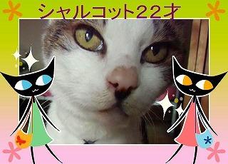 黒ネコ達とシャル.jpg