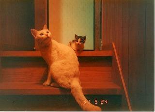 EPSON298.jpg