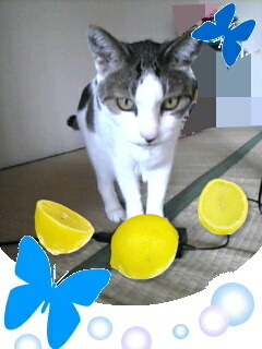 Image141-0.jpg