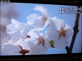 s-DSCF2087.jpg